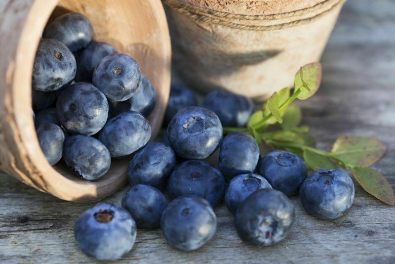 Owoce borówki otrzymane z rozmnożonego krzaku